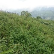 Darjeeling | Cose di Te