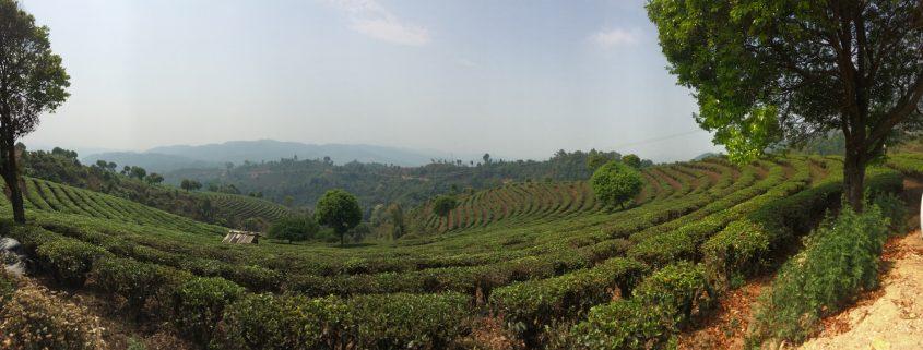Degustazione Tè Cinesi | Cose di Tè